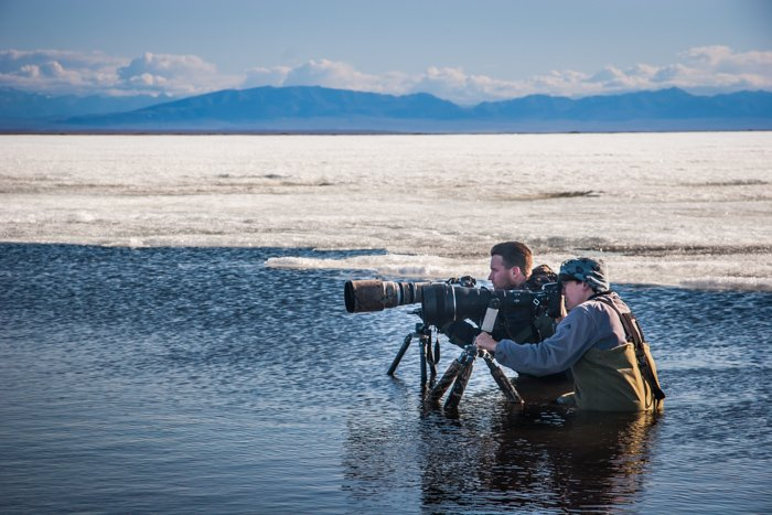 Two photographers shooting bird-photography with long telephoto lenses