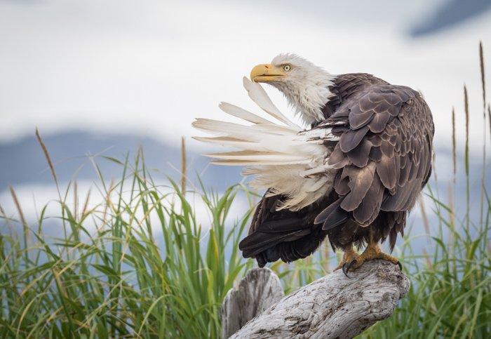 An eagle perched on a branch