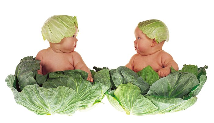 Anne Geddes portrait of two babies dressed like cabbages