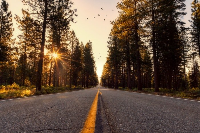 Low perspective photo of a road in a forest at sunset