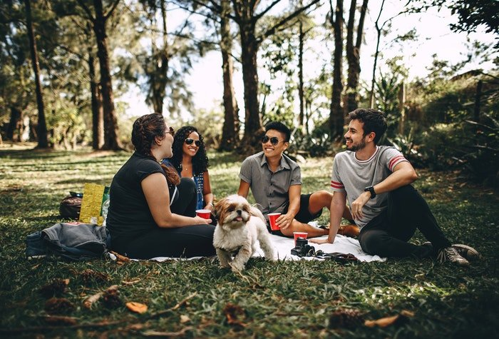 A group of four friends having a picnic in a forest