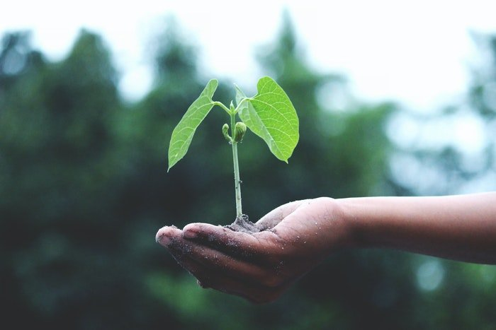 A hand holding a sprouting plant
