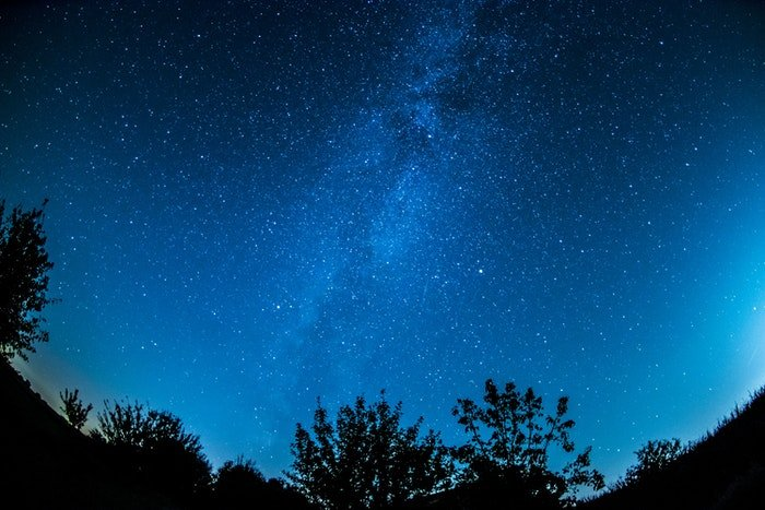 Impressive starry sky over silhouettes of trees