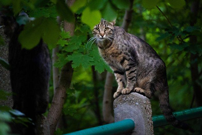A tabby cat on a fence