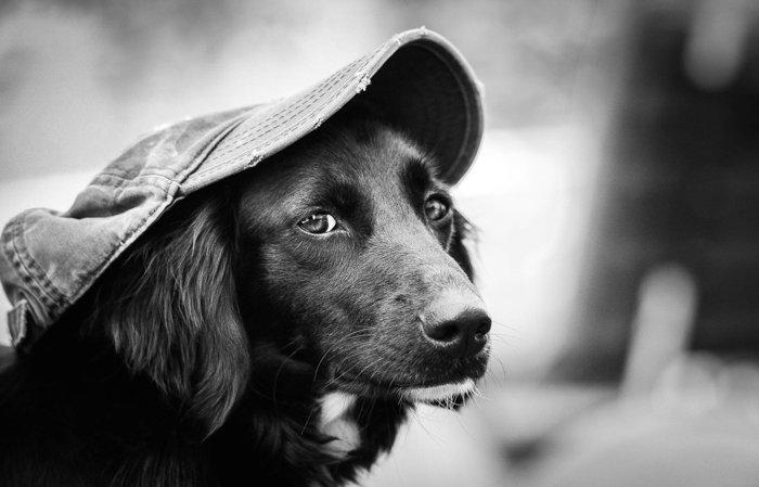 a sharp portrait of a dog wearing a hat
