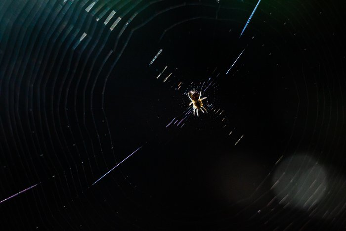 macro photo of a spider in its web
