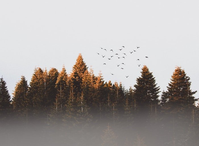 Minimal composition of birds flying over trees