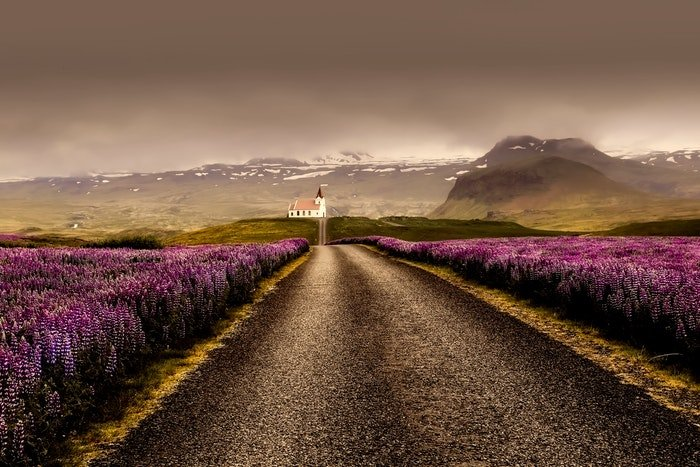 A road leading to a church surrounded by purple heather