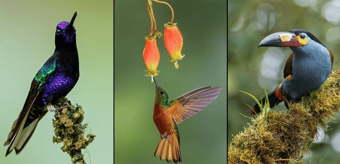 Bird photo triptych