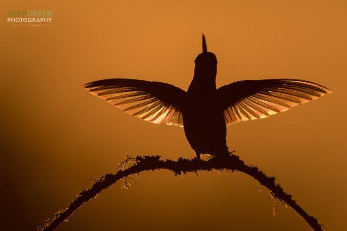 Silhouette bird photo