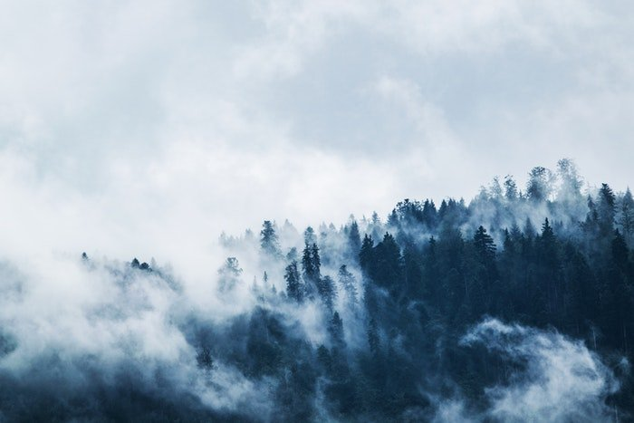 Fog over a forest