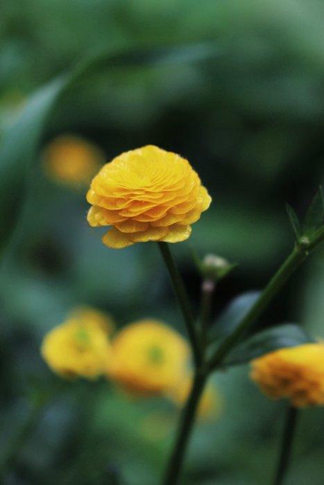 an image of a yellow flower with gaussian blur background