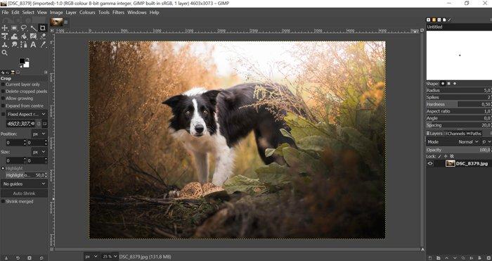 Screenshot of the GIMP Workspace