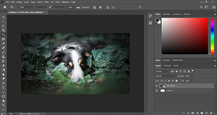 Screenshot of the Colour Tool in Photoshop