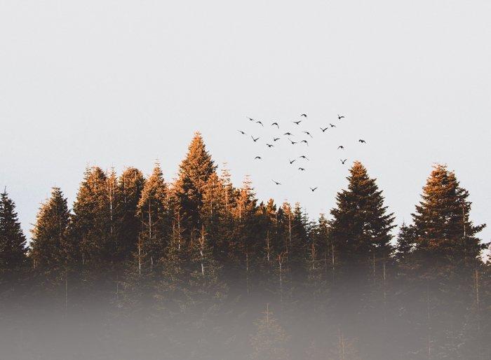 鸟儿在森林上空飞翔