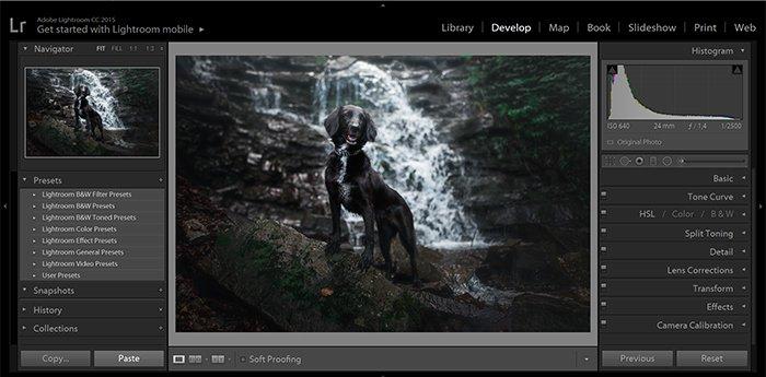 以瀑布为背景的黑狗肖像作为灯光预设的示例