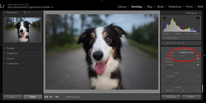 screenshot of editing a dog portrait to remove a vignette in Lightroom