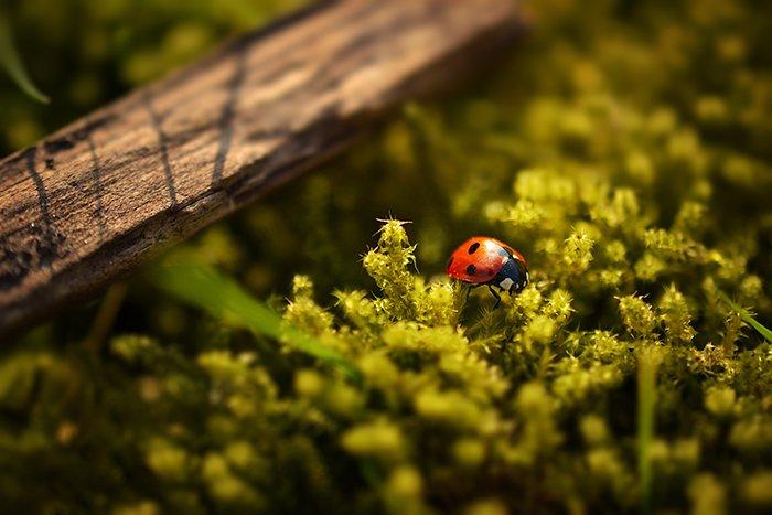 A macro shot of a ladybug on a plant using a shift tilt lens