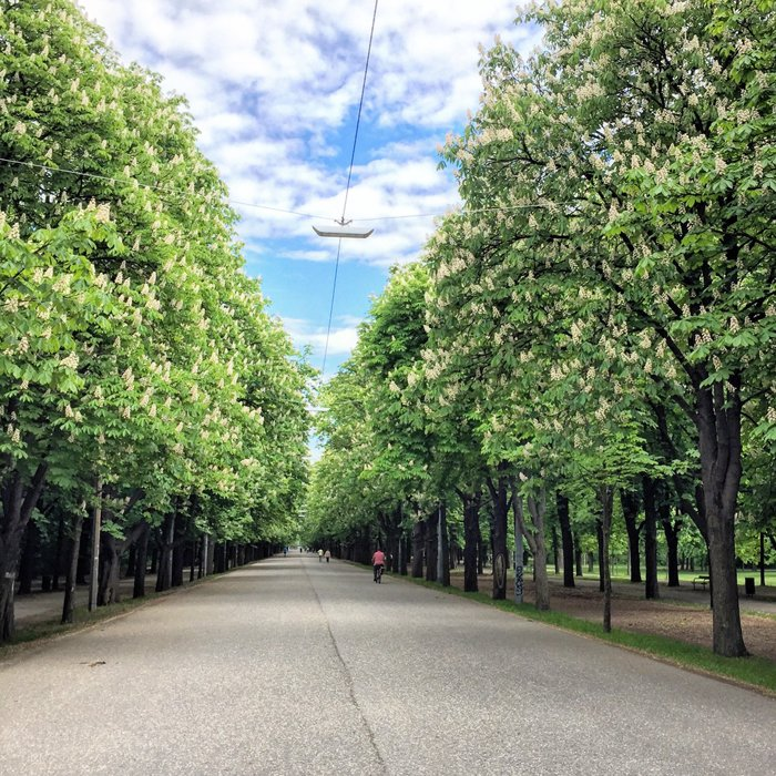 A road lined with trees