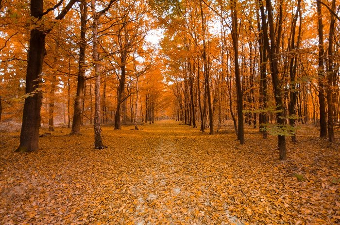 A forest covered in autumn leaves