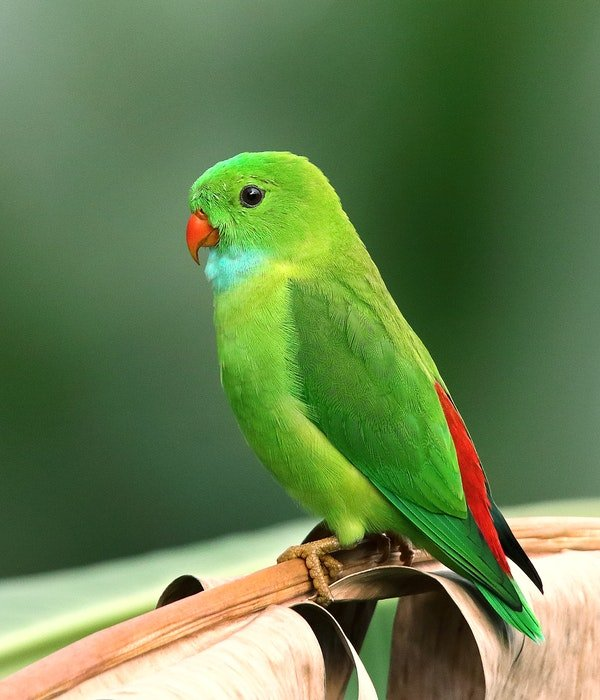 photo of a small green parrot in the zoo