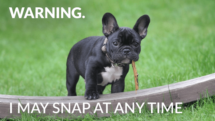 Funny photography meme over a photo of a dog