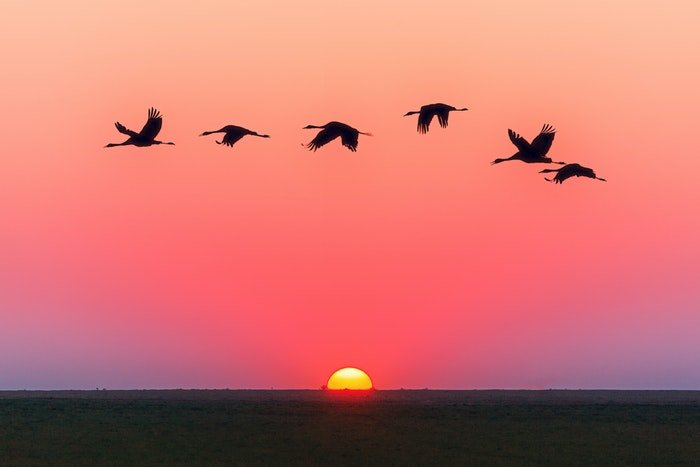 Birds flying across a sunset to illustrate landscape photography settings for wildlife