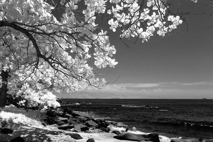 a black and white shot of a tree against a shoreline made with an infrared lens filter