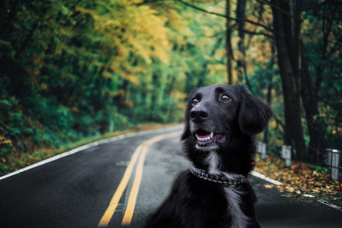 A black dog on a road
