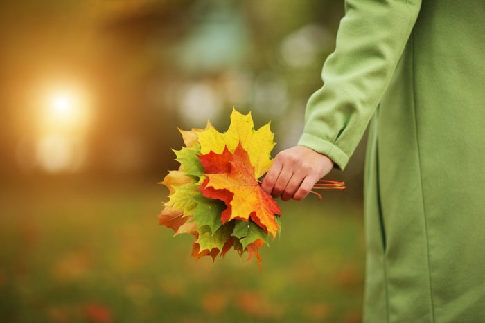 Female hand close-up with colorful bouquet of autumn leaves.