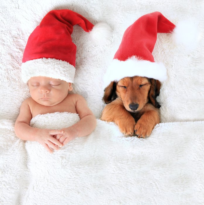 Cute baby Christmas photo of a newborn and a dog wearing Santa hats in bed