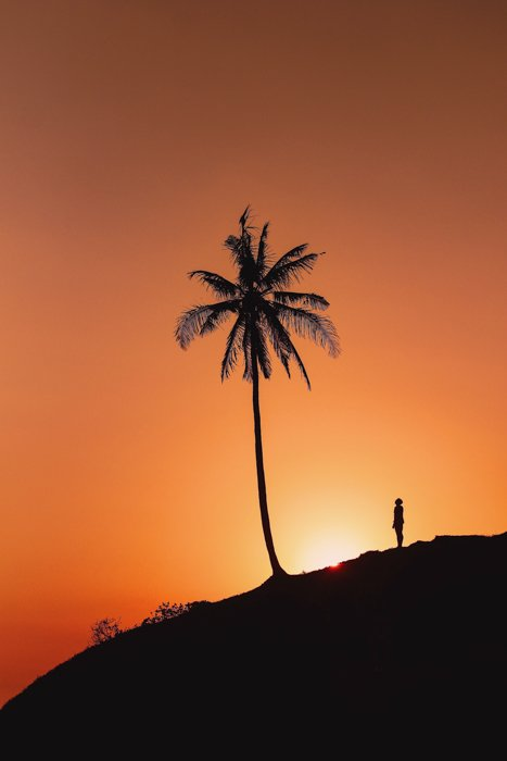 a silhouette image of a man looking up at a palm tree with setting sun backlighting