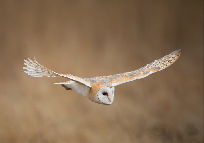 an image of a white and gold own in flight
