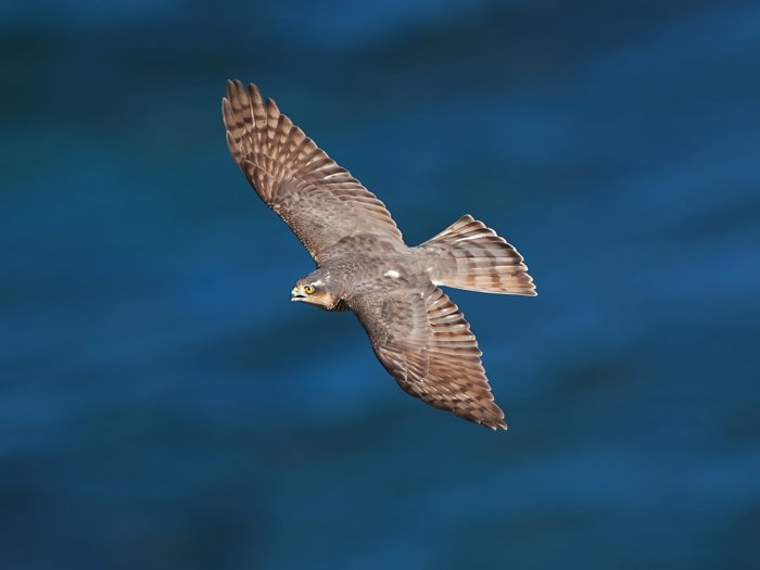 an image of an eagle in flight