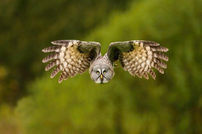 an image of an owl in flight