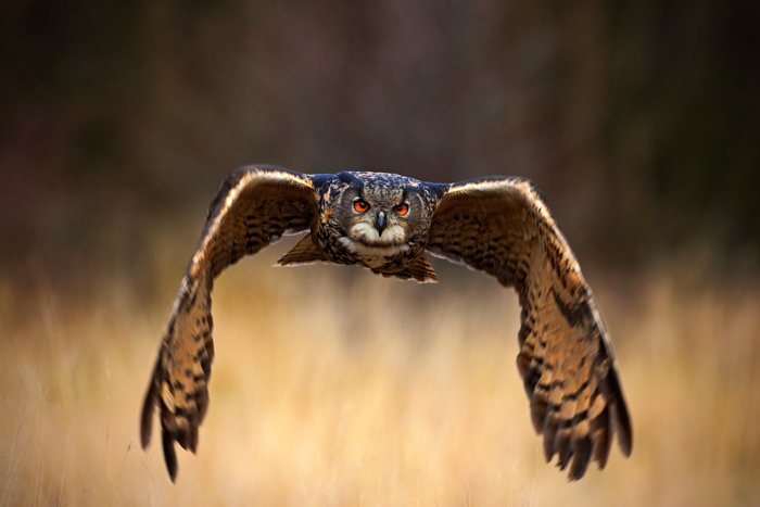 an image of an owl in flight at dusk