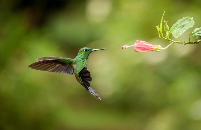 a photo of a green hummingbird hovering next to a pink flower