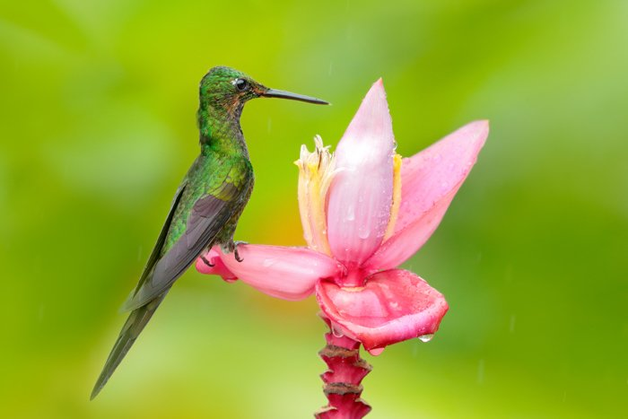 a photo of a green hummingbird perched on a pink flower