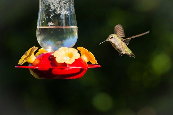 a photo of a hummingbird flying toward a bird feeder