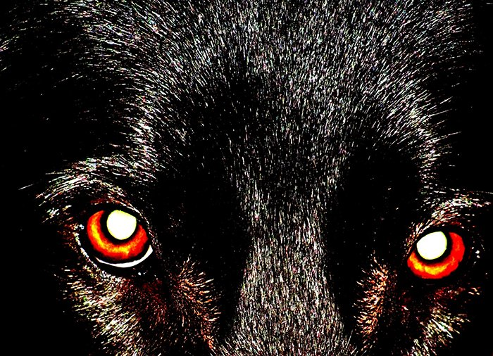 A dog with red eye effect.