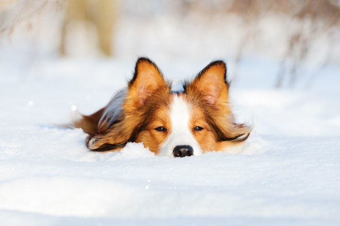 A cute dog in the snow