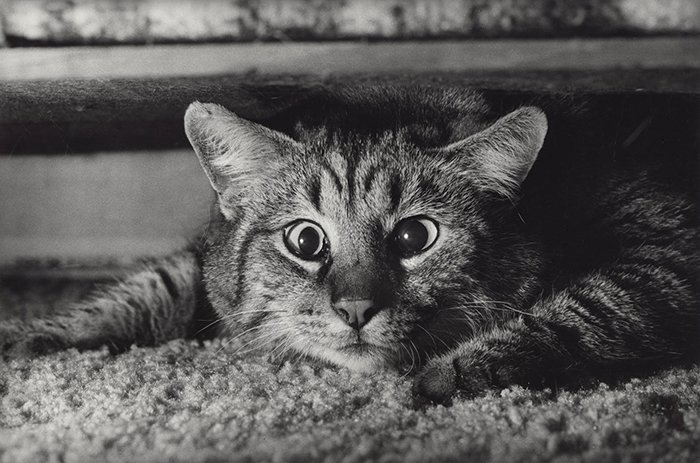 A cute photo of a cat taken with the Leica M6 by Terry Gruber