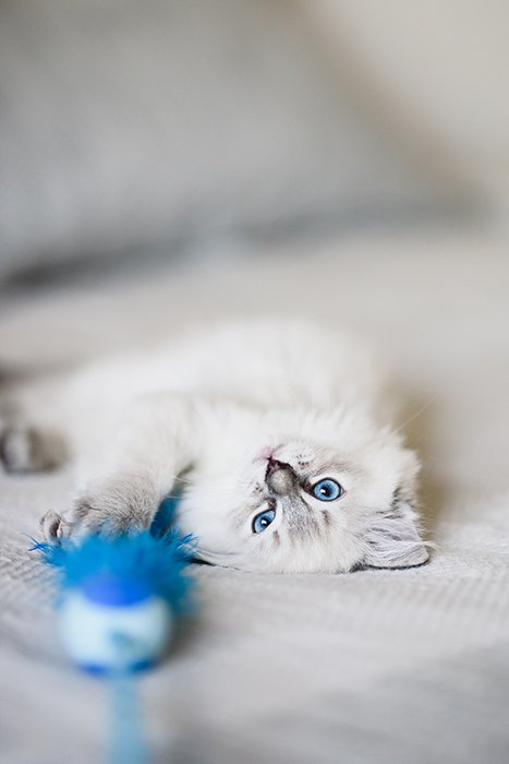 A cat photographed with a Sigma 85mm lens in a shallow depth of field