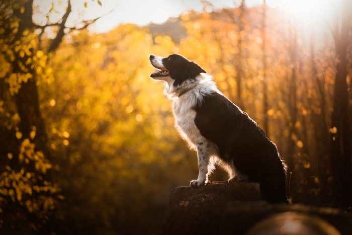 Photograph of a dog in backlight situation.