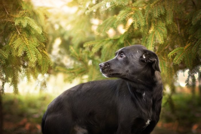 A cute black dog outdoors
