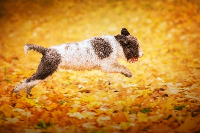 Cute pet portrait of a black and white dog jumping