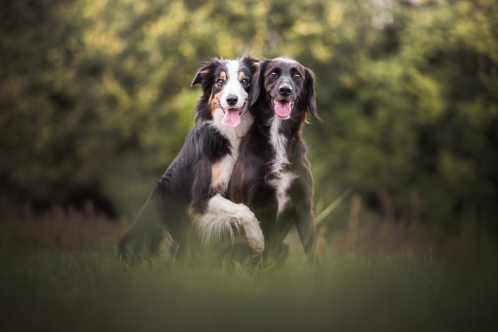 Cute pet portrait of two dogs outdoors