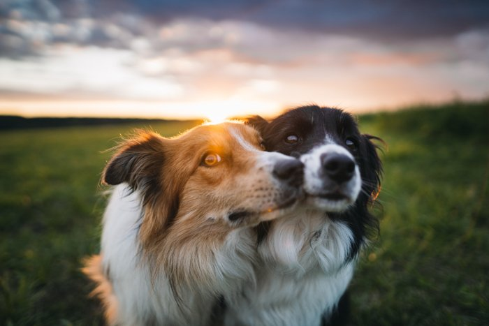 Two dogs in the countryside