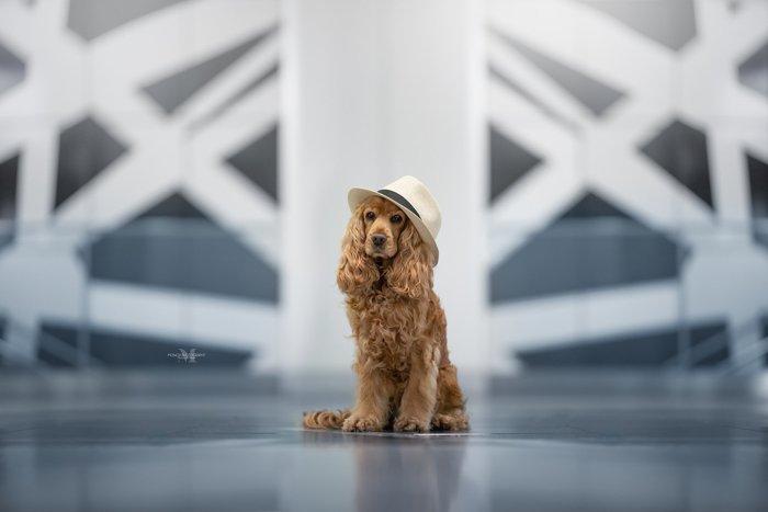 A cute brown dog in a hat