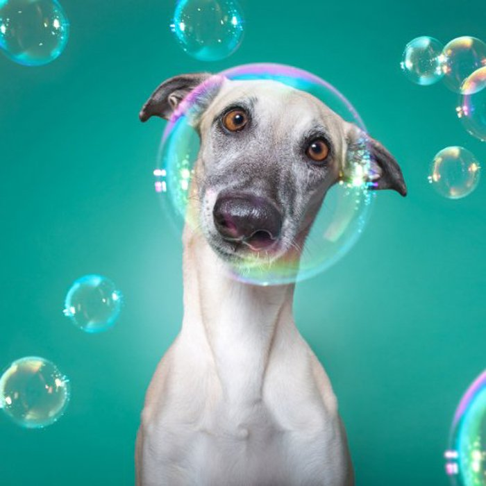 A close up of a dog surrounded by Bubbles